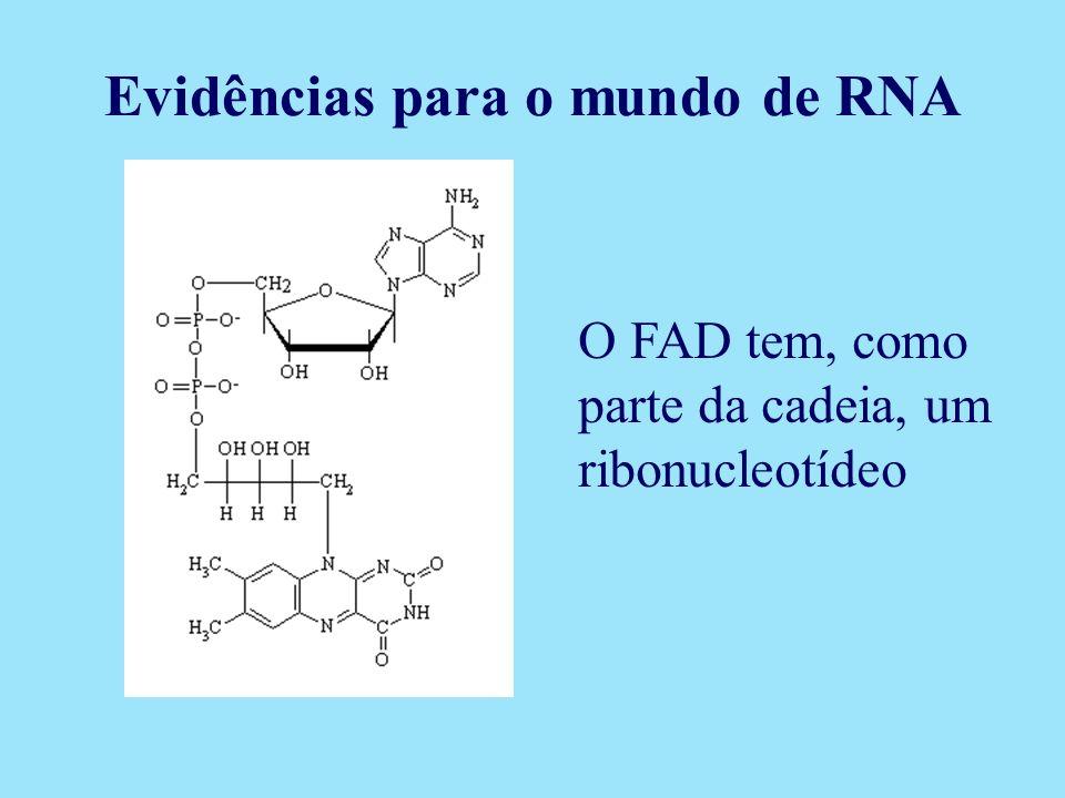 O FAD tem, como parte da cadeia, um ribonucleotídeo Evidências para o mundo de RNA