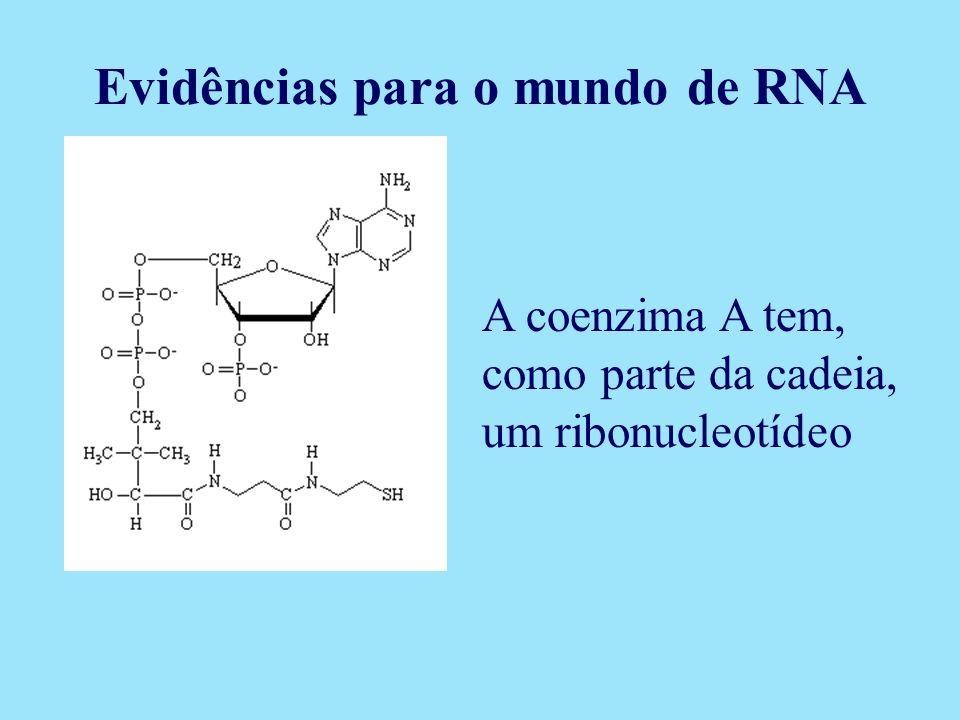A coenzima A tem, como parte da cadeia, um ribonucleotídeo Evidências para o mundo de RNA