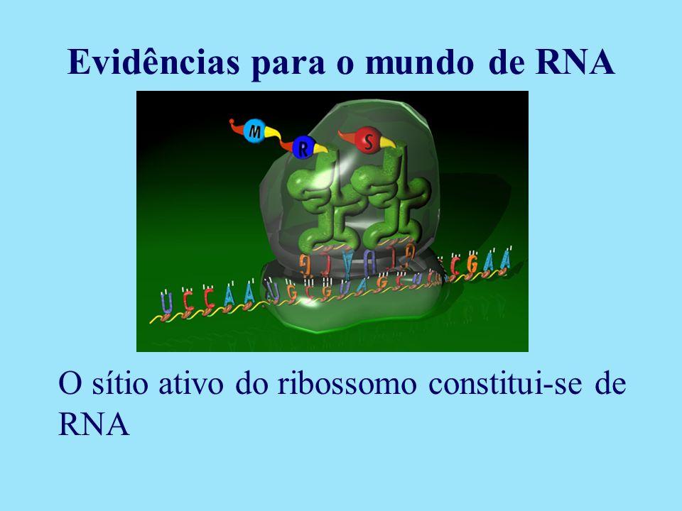O sítio ativo do ribossomo constitui-se de RNA Evidências para o mundo de RNA