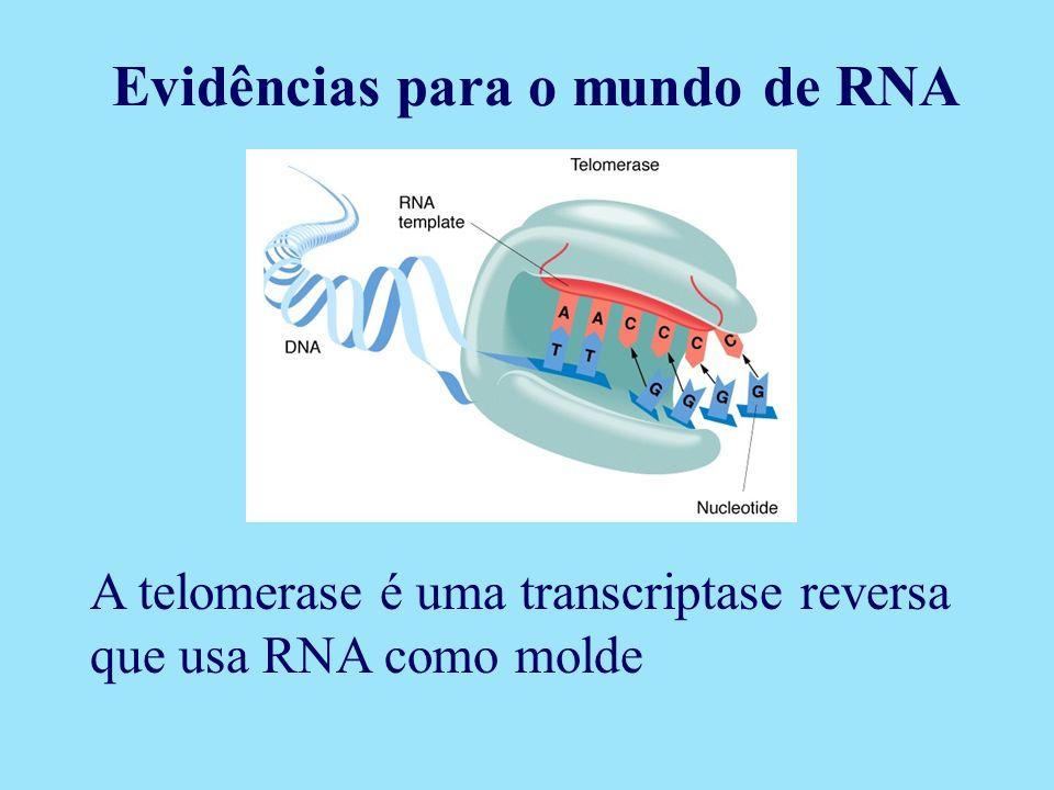 A telomerase é uma transcriptase reversa que usa RNA como molde Evidências para o mundo de RNA