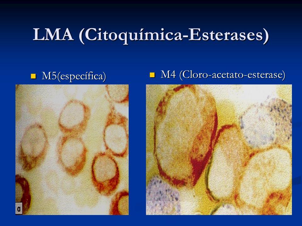 LMA (Citoquímica-Esterases) M5(específica) M5(específica) M4 (Cloro-acetato-esterase) M4 (Cloro-acetato-esterase)