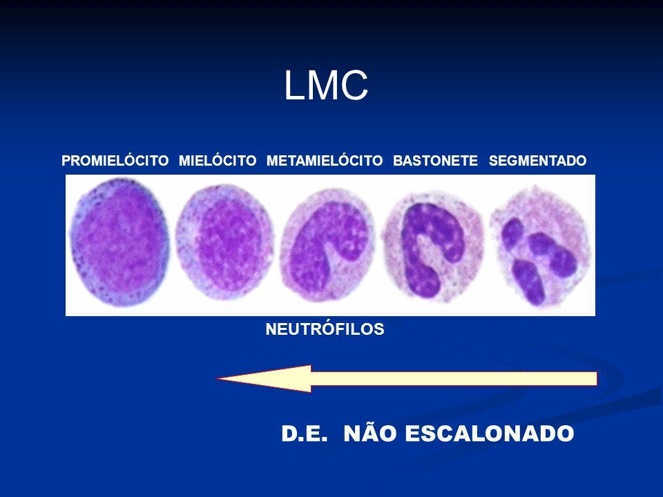 LMC D.E. NÃO ESCALONADO PROMIELÓCITO MIELÓCITO METAMIELÓCITO BASTONETE SEGMENTADO NEUTRÓFILOS