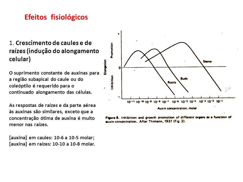 Efeitos fisiológicos 1. Crescimento de caules e de raízes (indução do alongamento celular) O suprimento constante de auxinas para a região subapical d