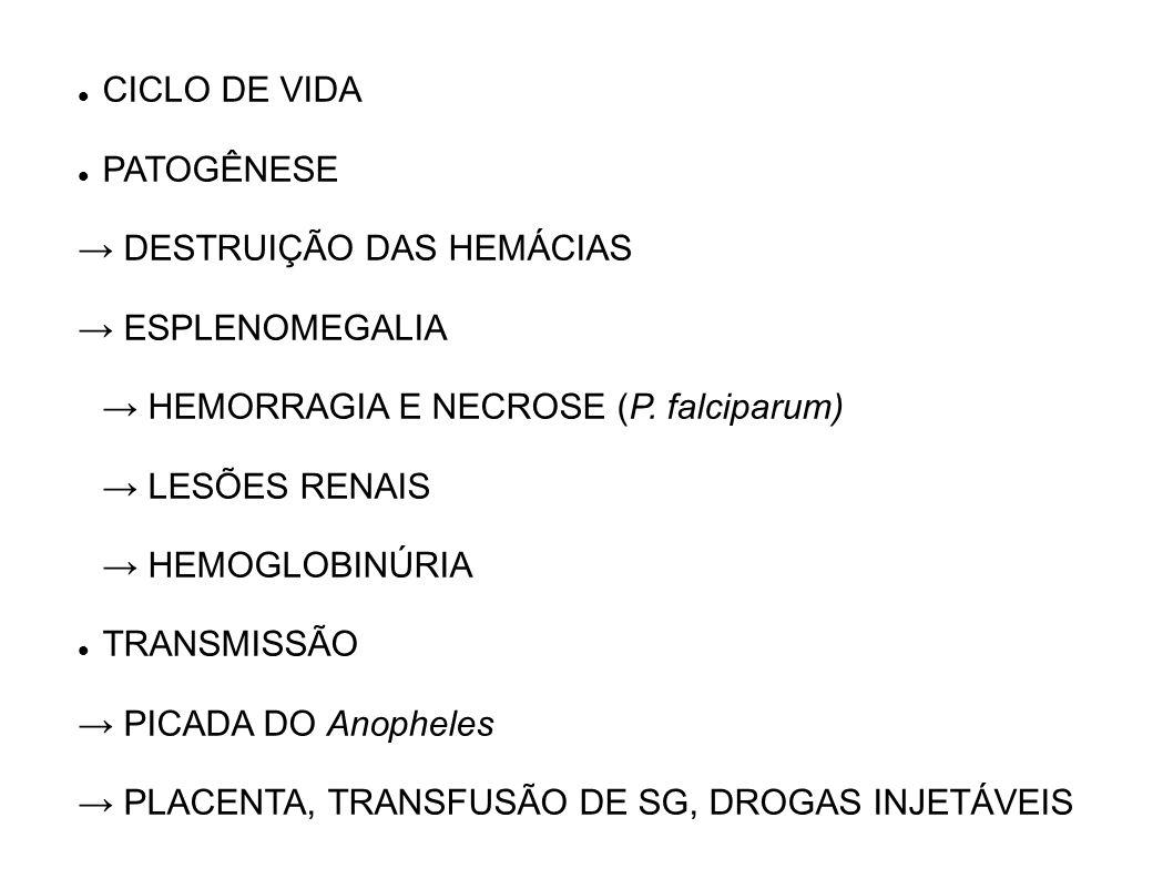 CICLO DE VIDA PATOGÊNESE DESTRUIÇÃO DAS HEMÁCIAS ESPLENOMEGALIA HEMORRAGIA E NECROSE (P. falciparum) LESÕES RENAIS HEMOGLOBINÚRIA TRANSMISSÃO PICADA D