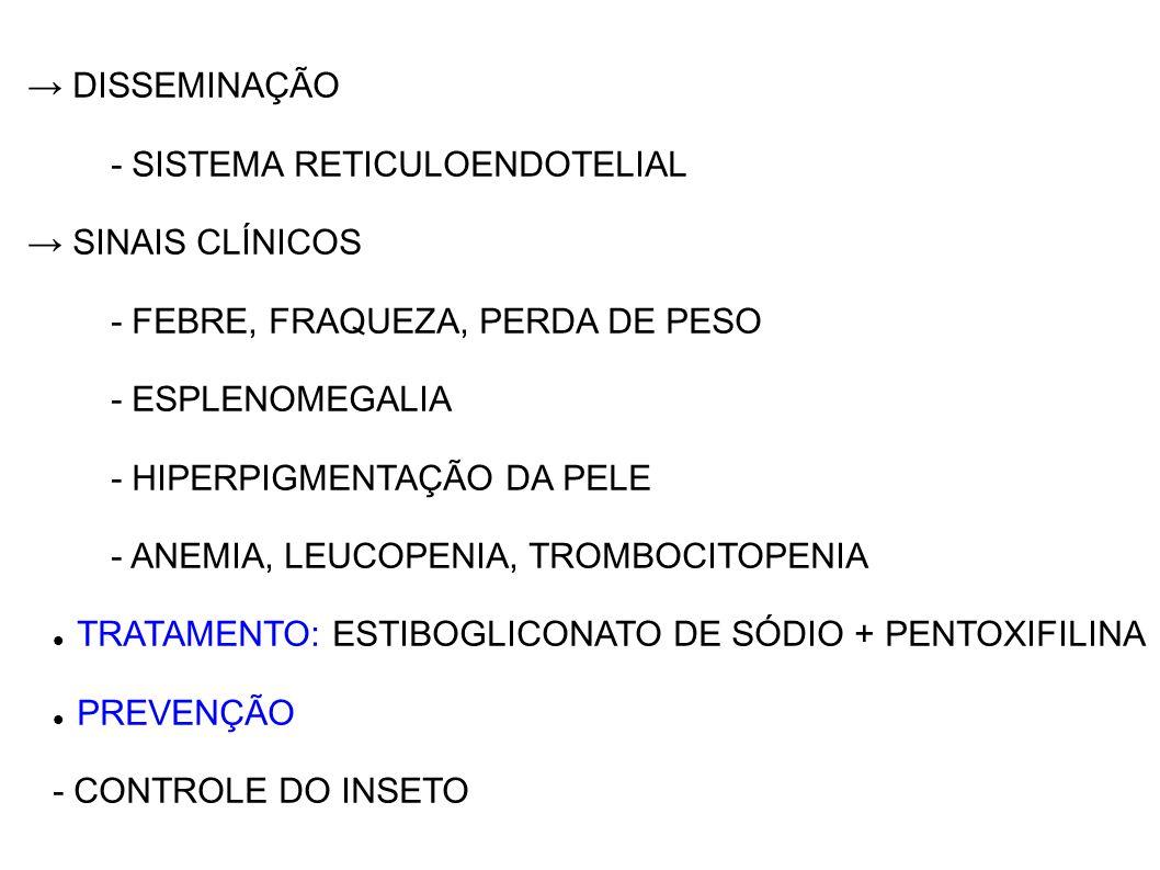 DISSEMINAÇÃO - SISTEMA RETICULOENDOTELIAL SINAIS CLÍNICOS - FEBRE, FRAQUEZA, PERDA DE PESO - ESPLENOMEGALIA - HIPERPIGMENTAÇÃO DA PELE - ANEMIA, LEUCO