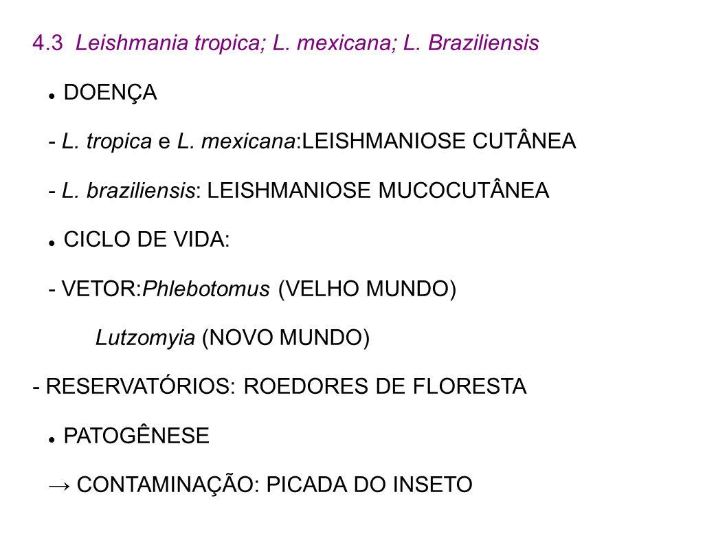 4.3 Leishmania tropica; L. mexicana; L. Braziliensis DOENÇA - L. tropica e L. mexicana:LEISHMANIOSE CUTÂNEA - L. braziliensis: LEISHMANIOSE MUCOCUTÂNE