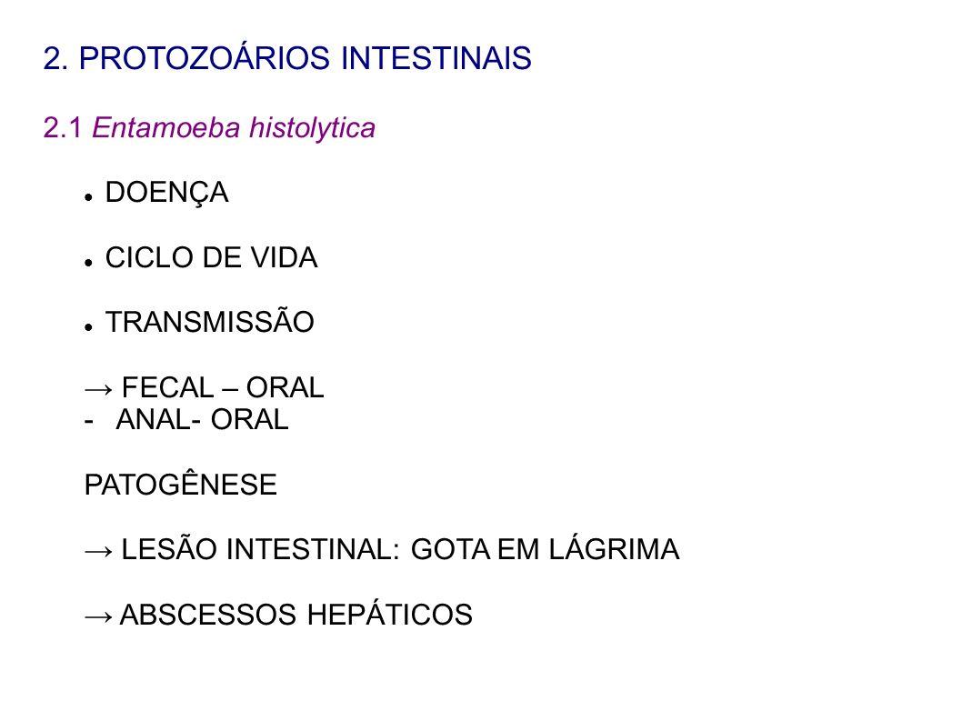2. PROTOZOÁRIOS INTESTINAIS 2.1 Entamoeba histolytica DOENÇA CICLO DE VIDA TRANSMISSÃO FECAL – ORAL - ANAL- ORAL PATOGÊNESE LESÃO INTESTINAL: GOTA EM
