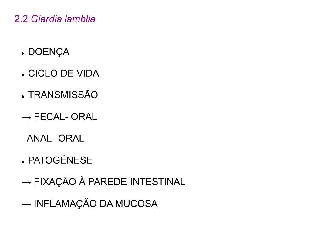 2.2 Giardia lamblia DOENÇA CICLO DE VIDA TRANSMISSÃO FECAL- ORAL - ANAL- ORAL PATOGÊNESE FIXAÇÃO À PAREDE INTESTINAL INFLAMAÇÃO DA MUCOSA