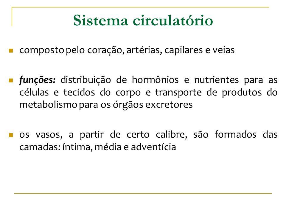 Sistema circulatório composto pelo coração, artérias, capilares e veias funções: distribuição de hormônios e nutrientes para as células e tecidos do c