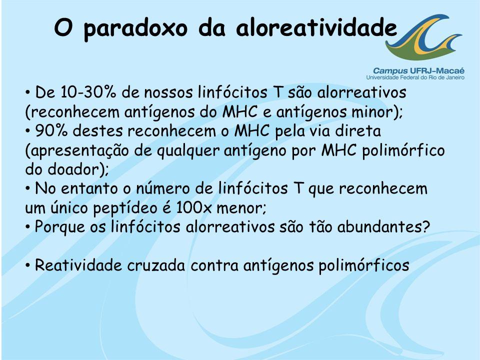 O paradoxo da aloreatividade De 10-30% de nossos linfócitos T são alorreativos (reconhecem antígenos do MHC e antígenos minor); 90% destes reconhecem