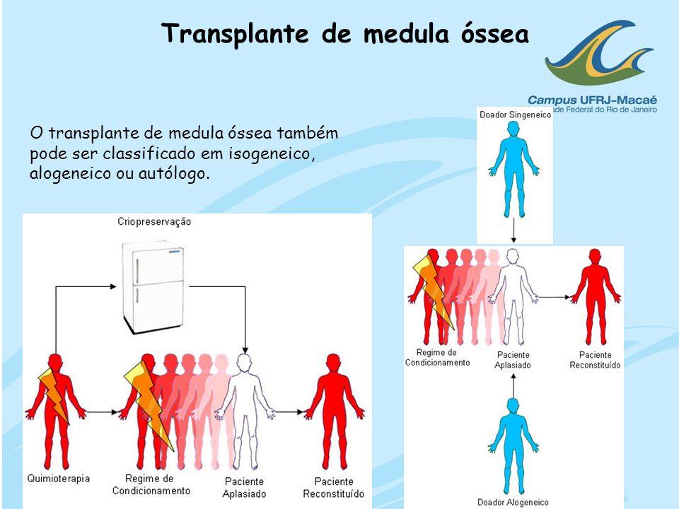 Transplante de medula óssea O transplante de medula óssea também pode ser classificado em isogeneico, alogeneico ou autólogo.