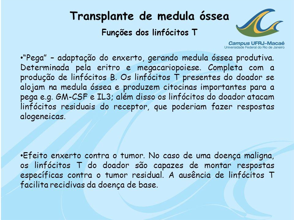 Transplante de medula óssea Funções dos linfócitos T Pega – adaptação do enxerto, gerando medula óssea produtiva. Determinada pela eritro e megacariop