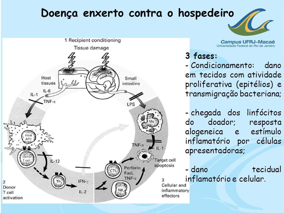 Doença enxerto contra o hospedeiro 3 fases: - Condicionamento: dano em tecidos com atividade proliferativa (epitélios) e transmigração bacteriana; - c
