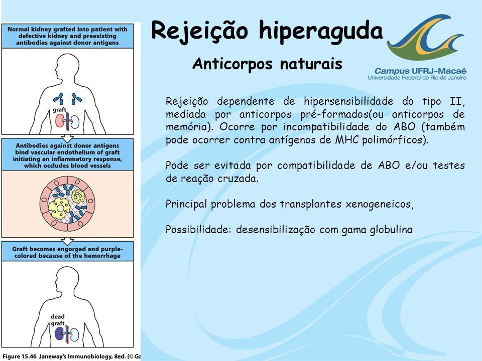 Rejeição hiperaguda Anticorpos naturais Rejeição dependente de hipersensibilidade do tipo II, mediada por anticorpos pré-formados(ou anticorpos de mem