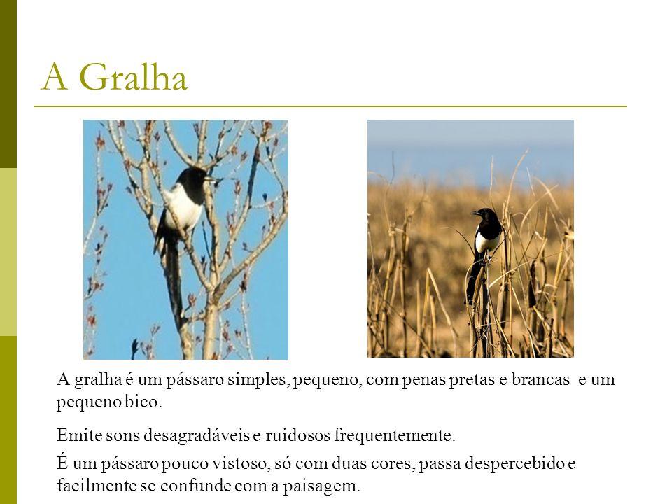A gralha é um pássaro simples, pequeno, com penas pretas e brancas e um pequeno bico. Emite sons desagradáveis e ruidosos frequentemente. A Gralha É u