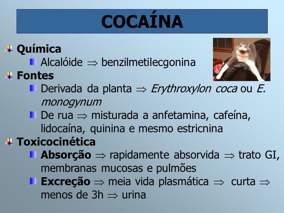 COCAÍNA Química Alcalóide benzilmetilecgonina Fontes Derivada da planta Erythroxylon coca ou E. monogynum De rua misturada a anfetamina, cafeína, lido