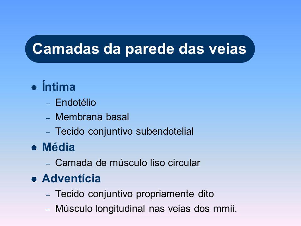 Camadas da parede das veias Íntima – Endotélio – Membrana basal – Tecido conjuntivo subendotelial Média – Camada de músculo liso circular Adventícia –