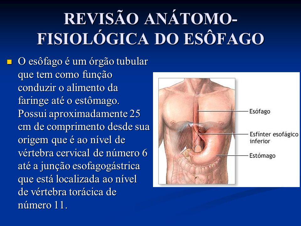REVISÃO ANÁTOMO- FISIOLÓGICA DO ESÔFAGO O esôfago é um órgão tubular que tem como função conduzir o alimento da faringe até o estômago. Possui aproxim