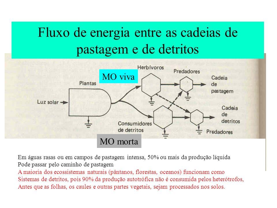 Fluxo de energia entre as cadeias de pastagem e de detritos MO viva MO morta Em águas rasas ou em campos de pastagem intensa, 50% ou mais da produção