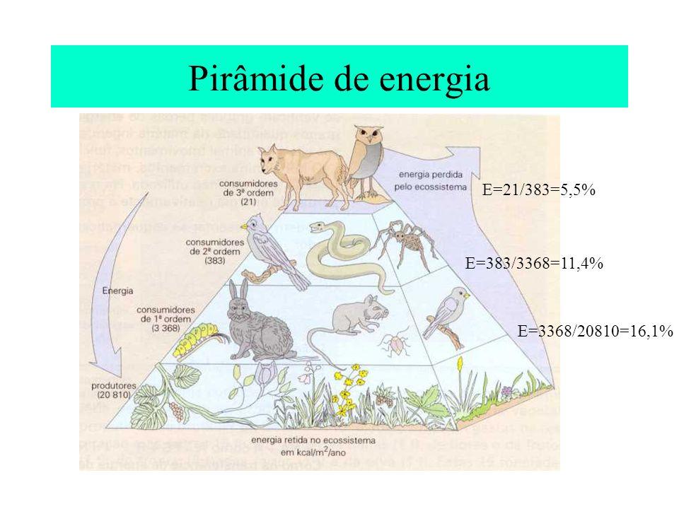 Pirâmide de energia E=3368/20810=16,1% E=383/3368=11,4% E=21/383=5,5%
