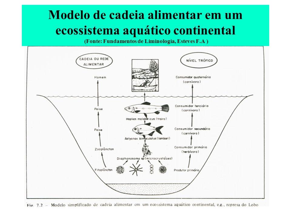Modelo de cadeia alimentar em um ecossistema aquático continental (Fonte: Fundamentos de Liminologia, Esteves F.A )