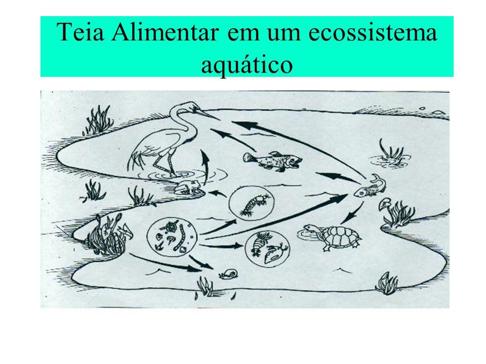 Teia Alimentar em um ecossistema aquático