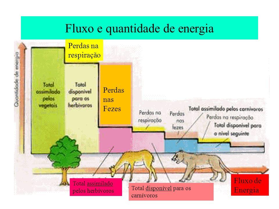 Fluxo e quantidade de energia Perdas na respiração Perdas nas Fezes Fluxo de Energia Total assimilado pelos herbívoros Total disponível para os carnív