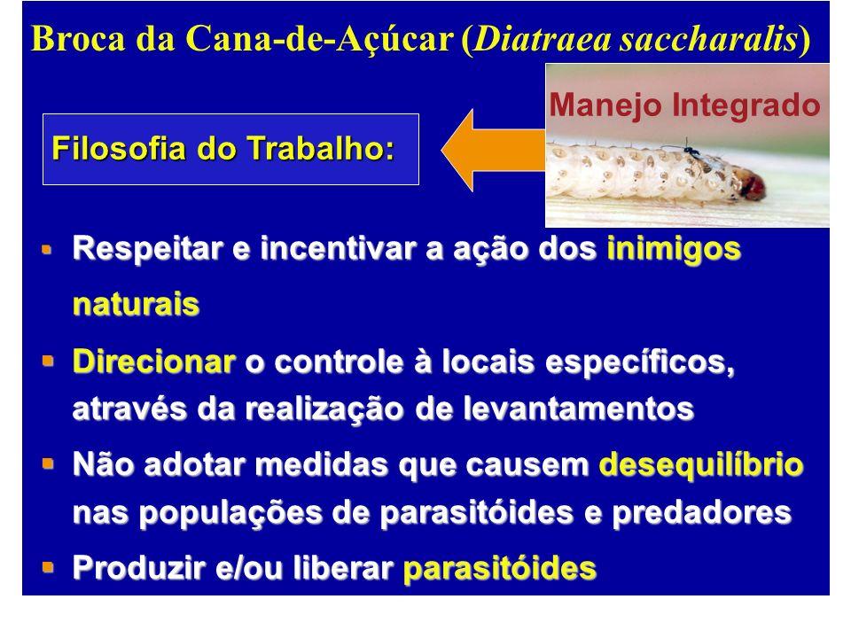 Broca da Cana-de-Açúcar (Diatraea saccharalis) Respeitar e incentivar a ação dos inimigos naturais Respeitar e incentivar a ação dos inimigos naturais