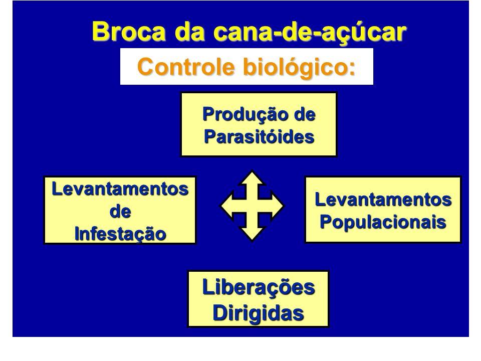 Controle biológico: Produção de Parasitóides LiberaçõesDirigidas LevantamentosdeInfestaçãoLevantamentosPopulacionais Broca da cana-de-açúcar