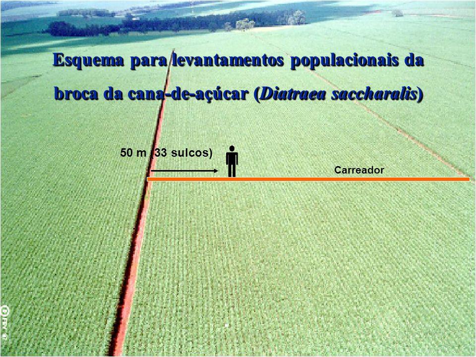 50 m (33 sulcos) Carreador Esquema para levantamentos populacionais da broca da cana-de-açúcar (Diatraea saccharalis)