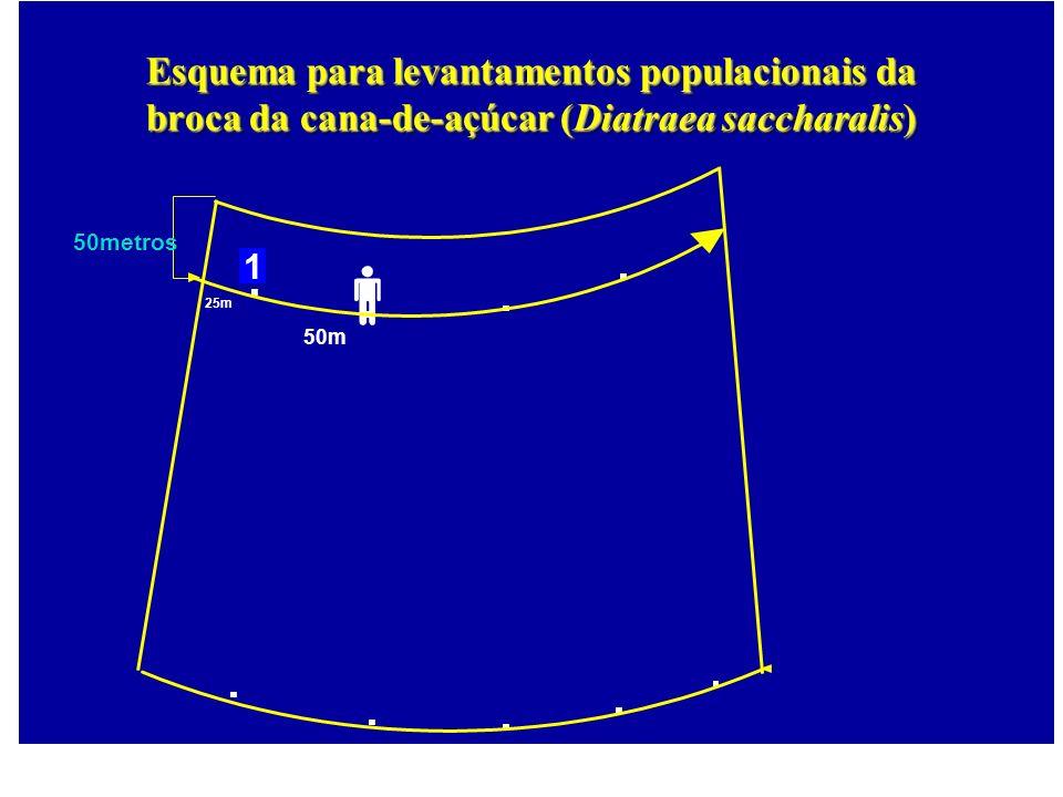 25m 50m 50metros 1 Esquema para levantamentos populacionais da broca da cana-de-açúcar (Diatraea saccharalis)