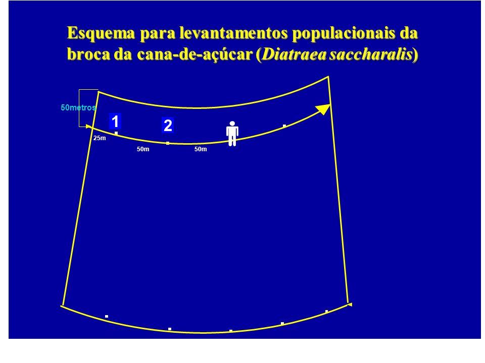 25m 50m 50metros 1 2 Esquema para levantamentos populacionais da broca da cana-de-açúcar (Diatraea saccharalis)