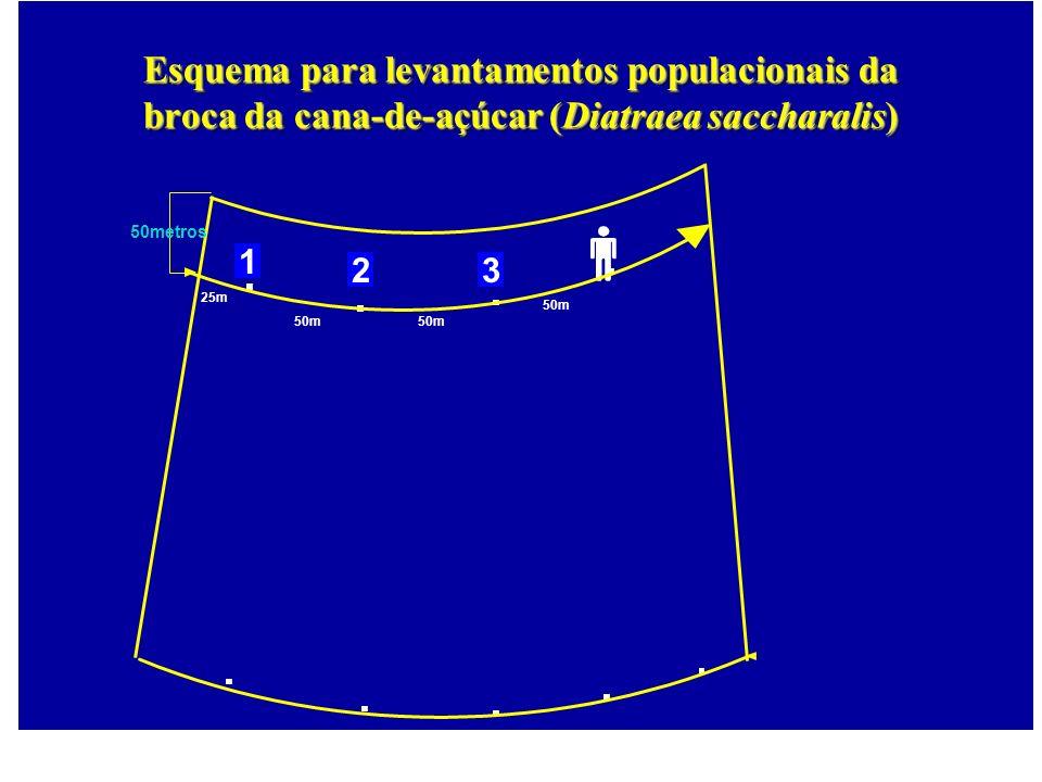 25m 50m 50metros 50m 1 23 Esquema para levantamentos populacionais da broca da cana-de-açúcar (Diatraea saccharalis)