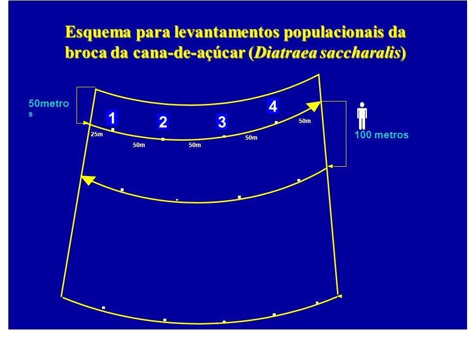 25m 100 metros 50m 50metro s 50m 1 23 4 Esquema para levantamentos populacionais da broca da cana-de-açúcar (Diatraea saccharalis)