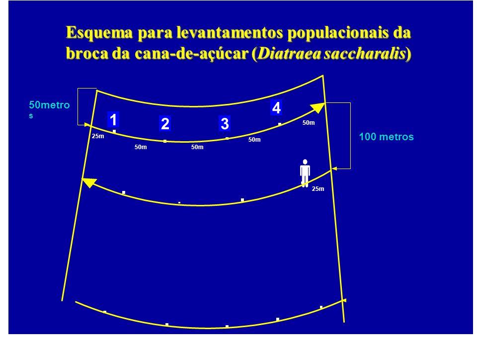 25m 100 metros 50m 50metro s 50m 25m 50m 1 23 4 Esquema para levantamentos populacionais da broca da cana-de-açúcar (Diatraea saccharalis)