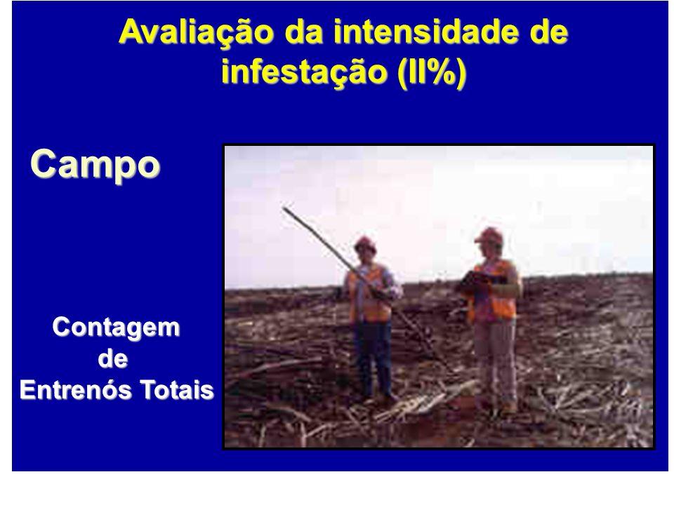 Contagemde Entrenós Totais Campo Avaliação da intensidade de infestação (II%)