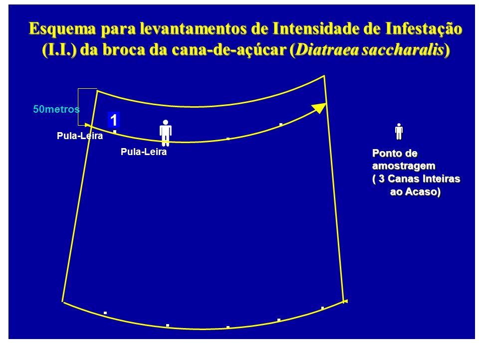 Pula-Leira 50metros 1 Esquema para levantamentos de Intensidade de Infestação (I.I.) da broca da cana-de-açúcar (Diatraea saccharalis) Pula-Leira Pont