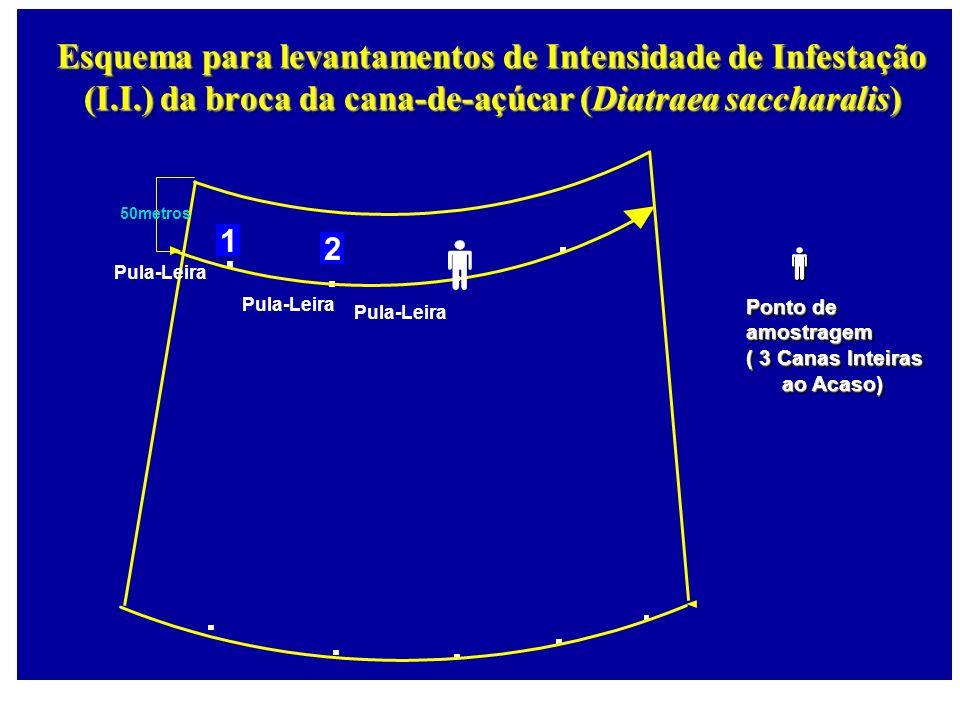 50metros 1 2 Pula-Leira Esquema para levantamentos de Intensidade de Infestação (I.I.) da broca da cana-de-açúcar (Diatraea saccharalis) Pula-Leira Po