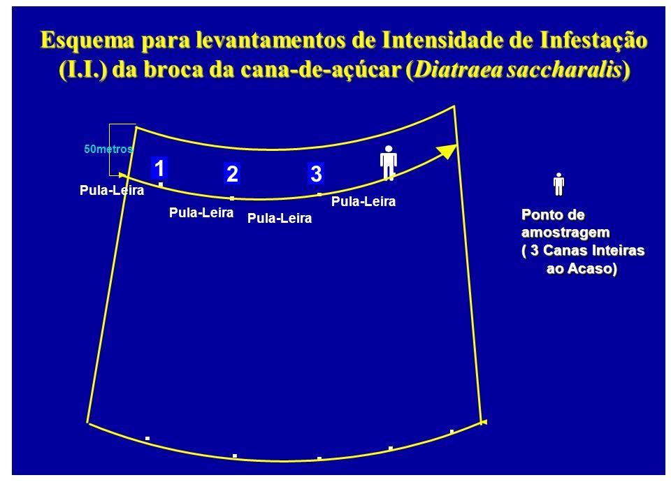 50metros 1 23 Pula-Leira Esquema para levantamentos de Intensidade de Infestação (I.I.) da broca da cana-de-açúcar (Diatraea saccharalis) Pula-Leira P