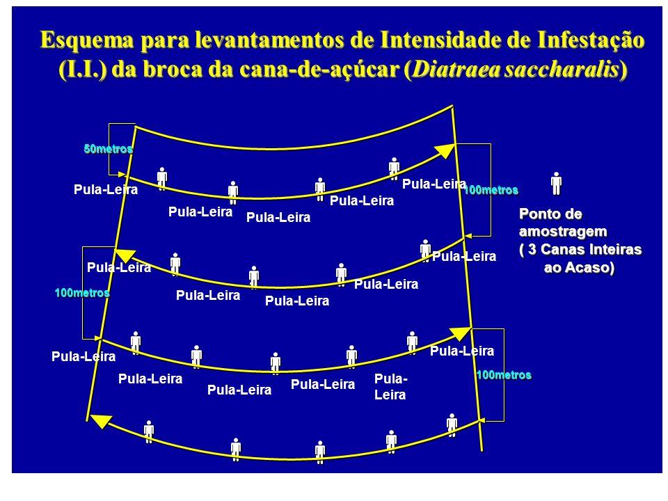 100metros100metros 50metros50metros 100metros100metros 100metros100metros Ponto de amostragem ( 3 Canas Inteiras ao Acaso) ao Acaso) Ponto de amostrag