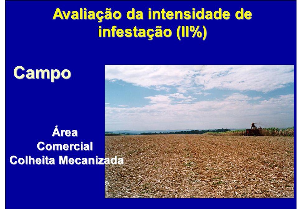 Campo ÁreaComercial Colheita Mecanizada Colheita Mecanizada Avaliação da intensidade de infestação (II%)