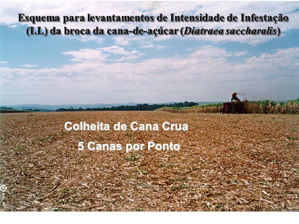 Esquema para levantamentos de Intensidade de Infestação (I.I.) da broca da cana-de-açúcar (Diatraea saccharalis) Colheita de Cana Crua 5 Canas por Pon
