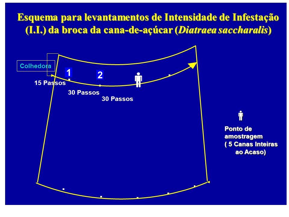 1 2 Esquema para levantamentos de Intensidade de Infestação (I.I.) da broca da cana-de-açúcar (Diatraea saccharalis) Colhedora 15 Passos 30 Passos Pon