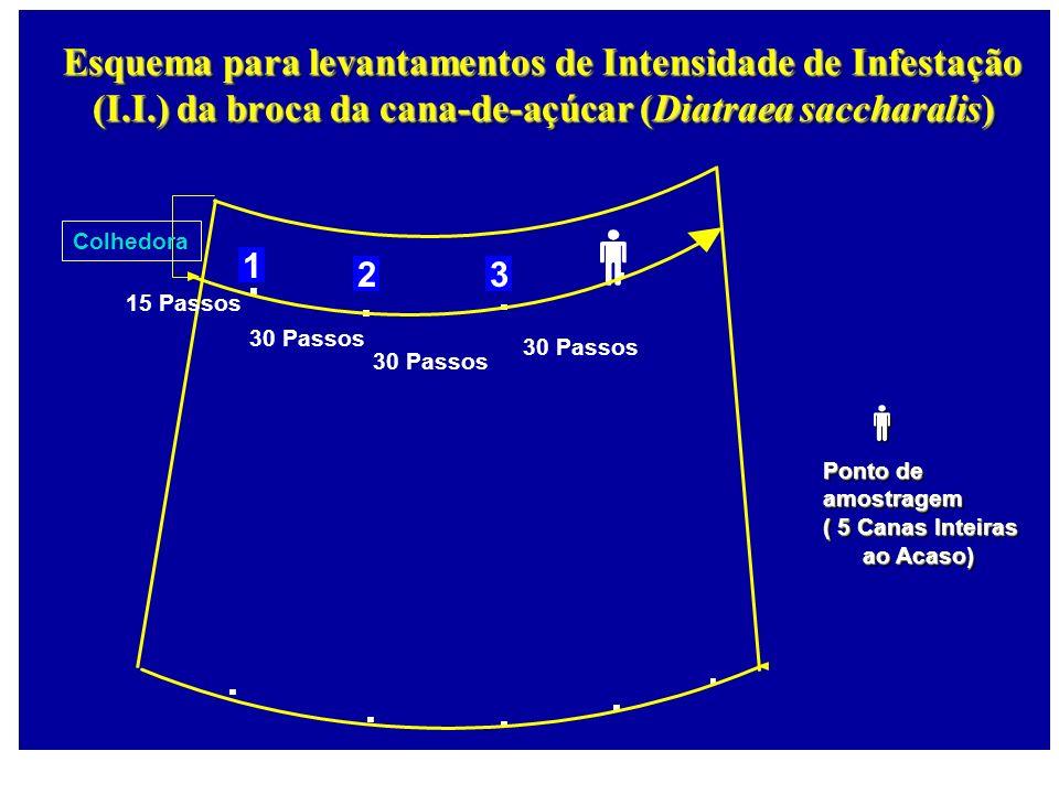 1 23 Esquema para levantamentos de Intensidade de Infestação (I.I.) da broca da cana-de-açúcar (Diatraea saccharalis) Colhedora 15 Passos 30 Passos Po