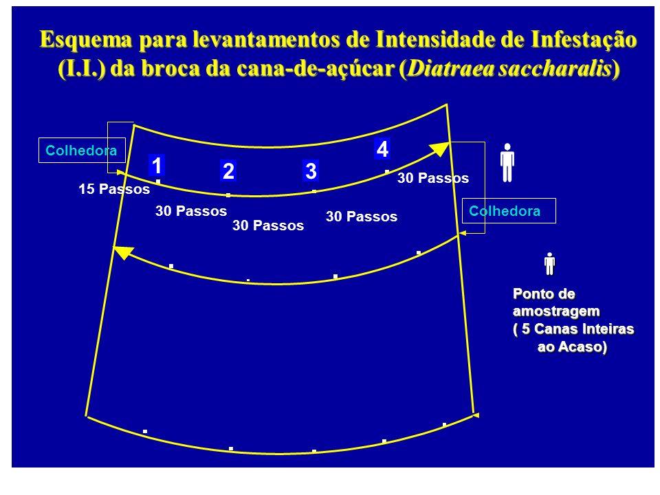Colhedora 1 23 4 Esquema para levantamentos de Intensidade de Infestação (I.I.) da broca da cana-de-açúcar (Diatraea saccharalis) Colhedora 15 Passos
