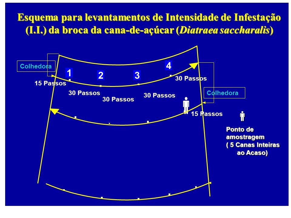 1 23 4 Esquema para levantamentos de Intensidade de Infestação (I.I.) da broca da cana-de-açúcar (Diatraea saccharalis) Ponto de amostragem ( 5 Canas