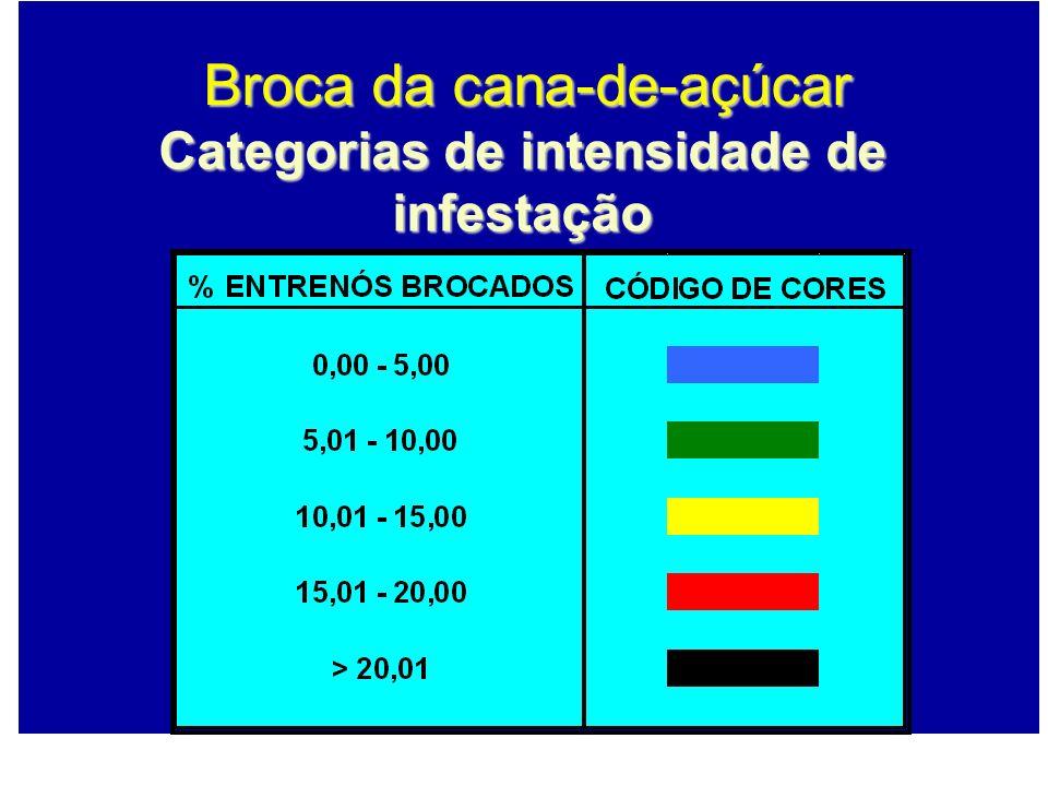 Categorias de intensidade de infestação Broca da cana-de-açúcar