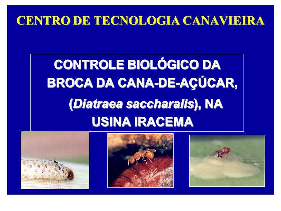 CENTRO DE TECNOLOGIA CANAVIEIRA CONTROLE BIOLÓGICO DA BROCA DA CANA-DE-AÇÚCAR, (Diatraea saccharalis), NA USINA IRACEMA (Diatraea saccharalis), NA USI