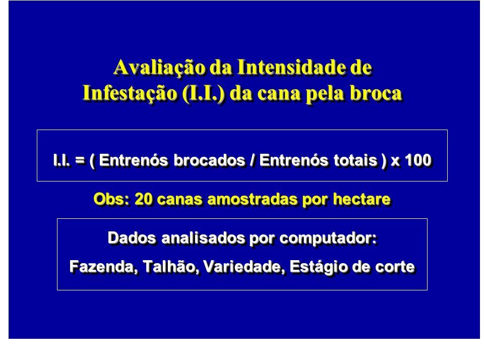 Avaliação da Intensidade de Infestação (I.I.) da cana pela broca I.I. = ( Entrenós brocados / Entrenós totais ) x 100 Obs: 20 canas amostradas por hec