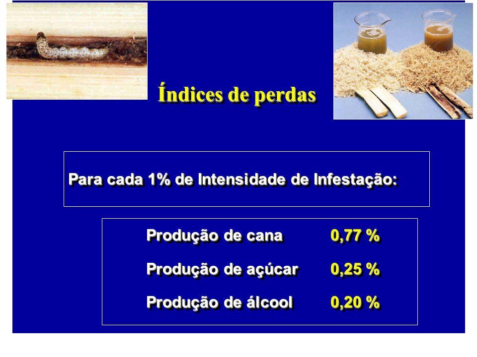 Índices de perdas Para cada 1% de Intensidade de Infestação: Produção de cana0,77 % Produção de açúcar0,25 % Produção de álcool0,20 % Para cada 1% de